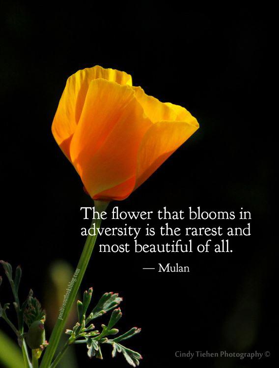 adversity flower